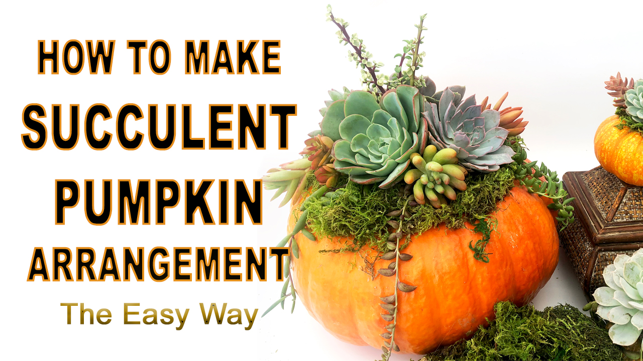 How To Decorate The Pumpkin With Succulents!