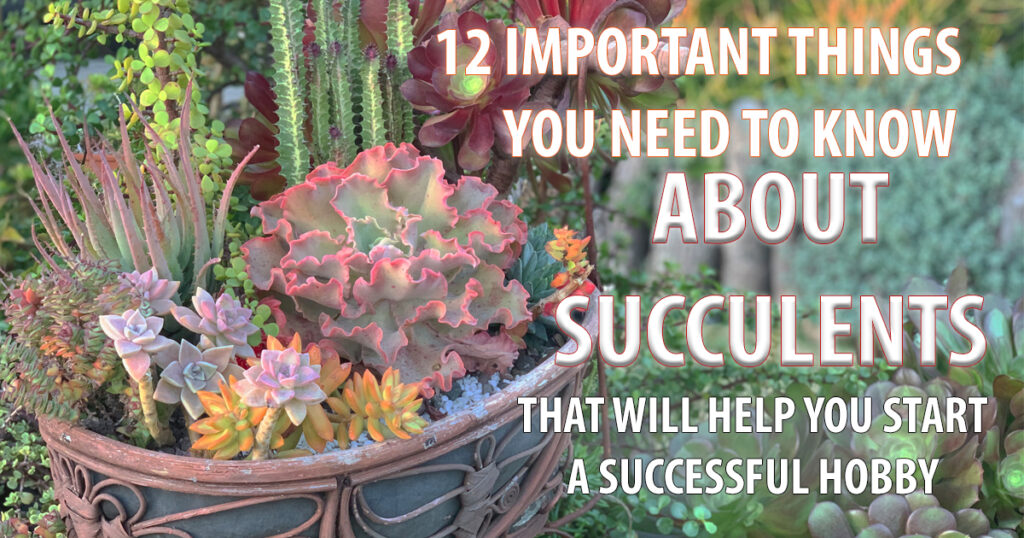 Succulents for beginners. How to Care for succulents