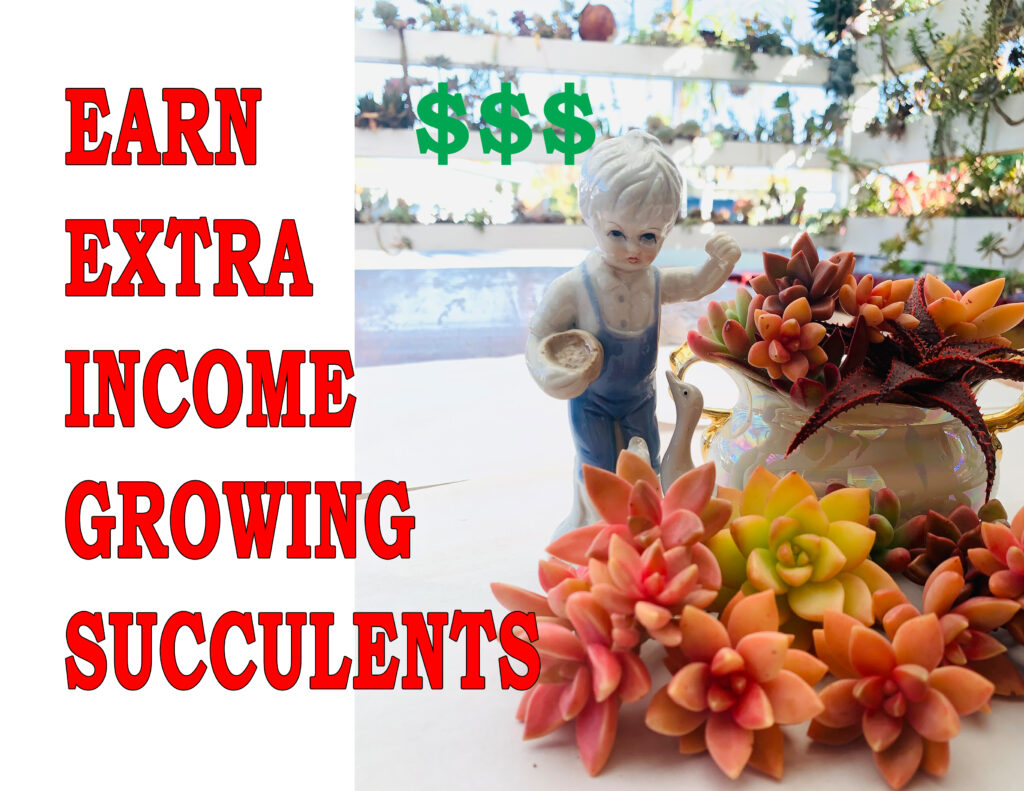 how to earn money growing succulents